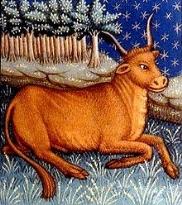 Toro ( Taurus ) rappresentato in un libro di astrologia del XV secolo